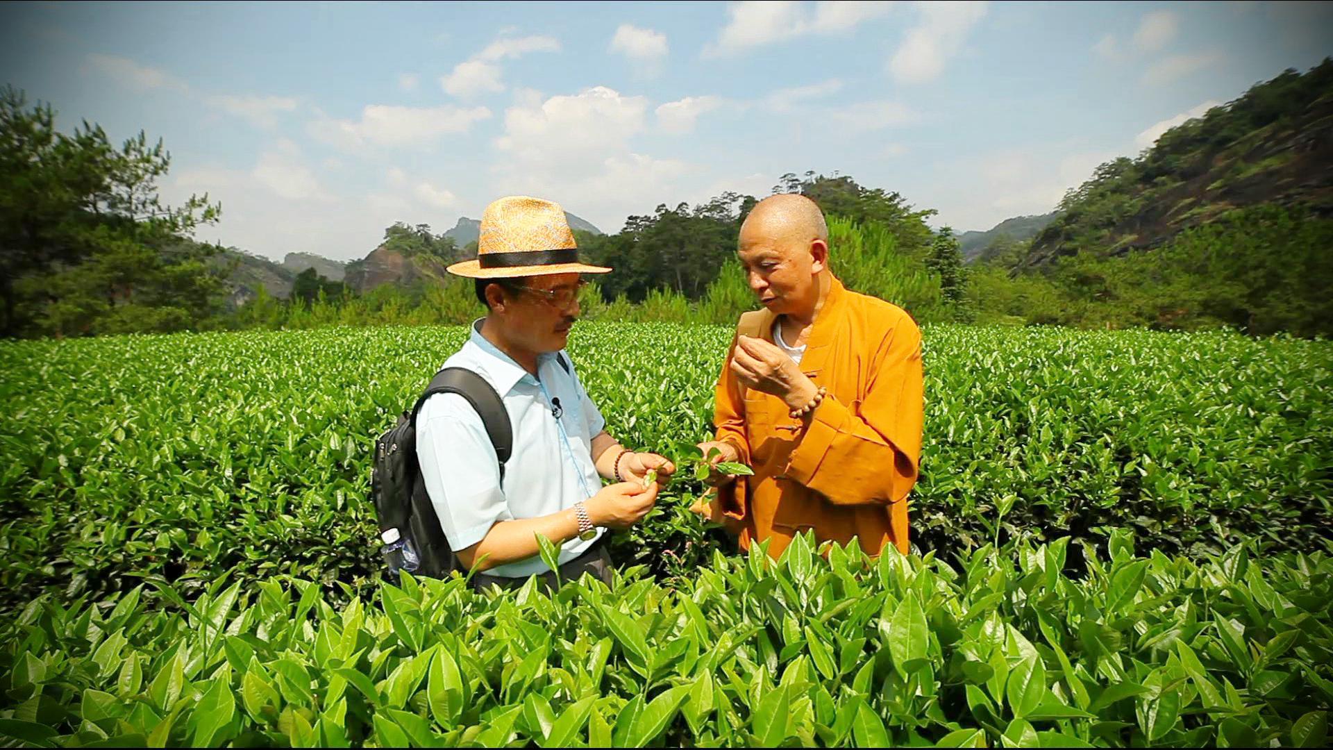 중국 차茶 기행