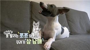 세상에 나쁜 개는 없다 시즌2, 좌충우돌! 못말리는 쪼쪼와 꾸러기 삼 남매