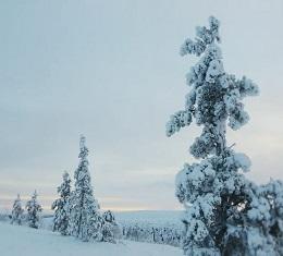 겨울왕국 핀란드! 오로라~오로라~, 우리가 상상하는 동화 속 겨울 왕국의 풍경이 나라 전체에 화폭처럼 펼쳐지는 땅, 핀란드에서 '불의 여우' 오로라를 만날 수 있을까?