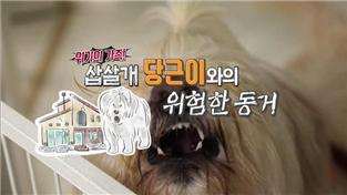 세상에 나쁜 개는 없다 시즌2, 위기의 가족! 삽살개 당근이와의 위험한 동거