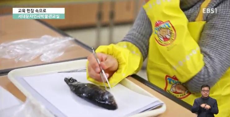<교육현장 속으로> 서대문자연사박물관 박물관교실