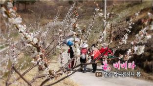 한국기행, 봄, 비비다 1부 달콤 쌉싸름하니 봄