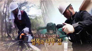 극한 직업, 거목과의 사투, 벌목과 나무집