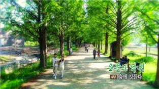 한국기행, 은둔의 낙원 4부 숲에 깃들다