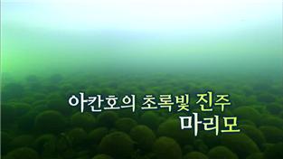 과학 다큐멘터리, 아칸호의 초록빛 진주, 마리모
