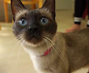 고양이를 부탁해