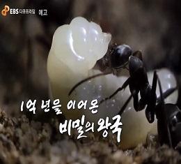 다큐프라임 <비밀의 왕국>, 인간의 발 밑 지하 세계, 엄청난 힘과 질서에 의해 움직이고 유지되는 흥미진진한 개미의 세계, 숨겨진 왕국의 이야기!