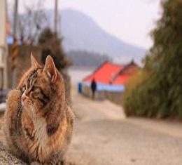 """고양이는 '봄'이로다!, """"우리 섬마을에는 이것이 보물이여~"""" 21가구가 모여 사는 섬마을에 사람보다 더 많은 고양이들과의 동고동락!"""