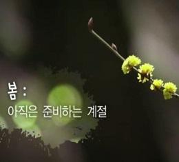 다시 '봄'을 준비한다, 웅크렸던 기지개를 켜고 온몸의 에너지를 다해 시작을 알린다! 멈춰서 바라보기 전에는 알 수 없는 자연스러운 삶의 과정.