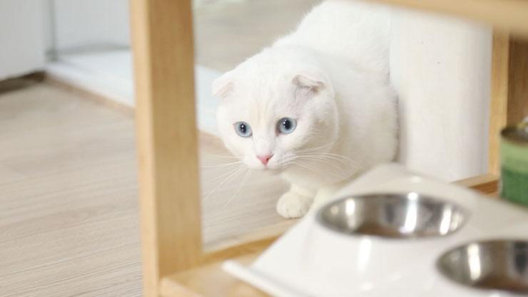 고양이를 부탁해 , 베코의 하나뿐인 내 사랑