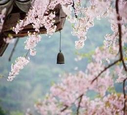 봄~봄~봄~봄이 왔어요!, 봄이 와서 꽃이 피는 것이 아니라 꽃이 피어나야 봄이 온다. 수많은 봄꽃 중에서도 매화만이 가진 특별한 매력은?