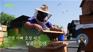 희망풍경, 꿀벌 아빠 호창 씨의 달콤한 인생