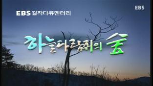 EBS 걸작 다큐멘터리, 하늘다람쥐의 숲