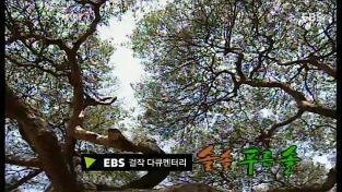 EBS 걸작 다큐멘터리, 솔, 솔 푸른 솔