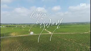 세계 견문록 아틀라스, 프랑스 와인기행 - 2부 샹파뉴