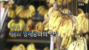 하나뿐인 지구, 바나나의 경고! 해외 병해충과의 전쟁