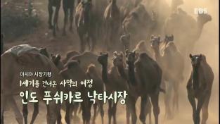 세계 견문록 아틀라스, 아시아 시장기행- 1세기를 건너온 사막의 여정 인도 푸쉬카르 낙타시장