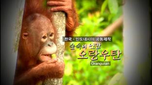 다큐프라임, 숲 속의 인간, 오랑우탄