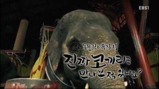 하나뿐인 지구, 동물 권리 특집1부 - 진짜 코끼리를 만나본 적 있나요?