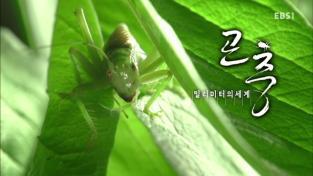 다큐프라임, 곤충 밀리미터의 세계 2부 잎 하나의 우주