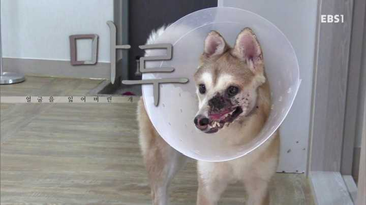 세상에 나쁜 개는 없다, 얼굴을 잃어버린 개 마루