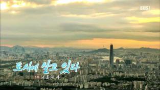 한국기행, 도시에 살고있다 1부 서울의 봄