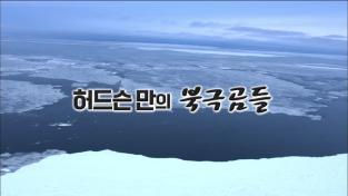 세계의 눈, 허드슨 만의 북극곰들
