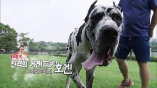 세상에 나쁜 개는 없다 시즌2, 통제불가! 진격의 거견(巨犬) 그레이트 데인 호겐