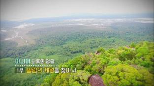 세계테마기행, 아시아 최후의 정글 1부 밀림의 제왕을 찾아서