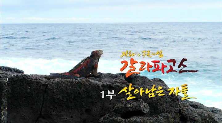 다큐프라임, 진화와 공존의 섬 갈라파고스 제 1부 살아남은 자들