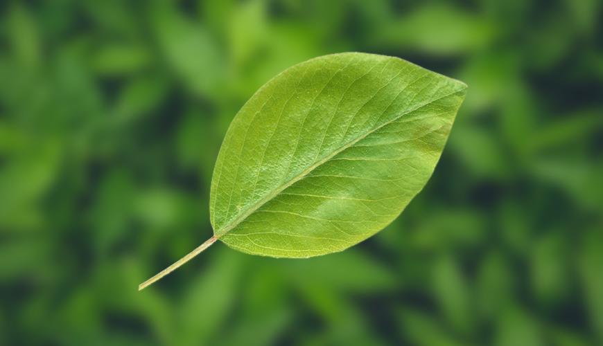 식물 확대