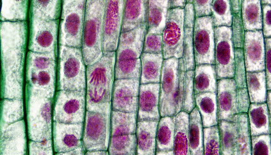 식물 세포