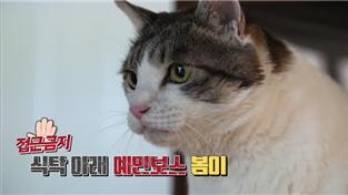 고양이를 부탁해 시즌1