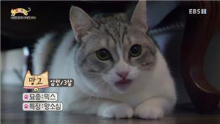 고양이를 부탁해 시즌2