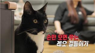 고양이를 부탁해 시즌4
