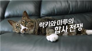 고양이를 부탁해 시즌5