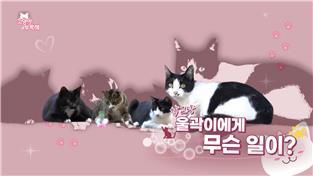 고양이를 부탁해 시즌6