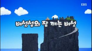 바오밥섬의 파오파오