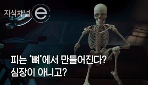 왜 뼈에서 피가 만들어질까?