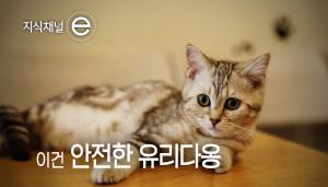 발명할 고양~