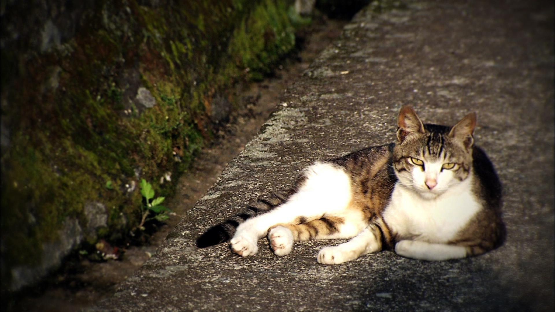 구해줘, 고양이 홈즈
