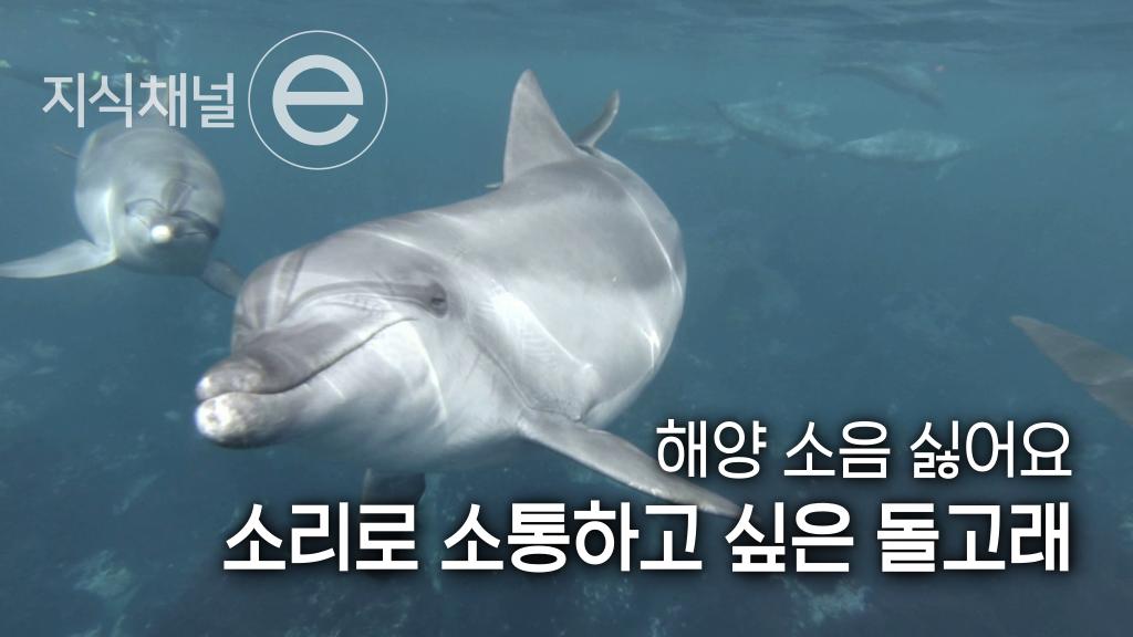 돌고래의 소리