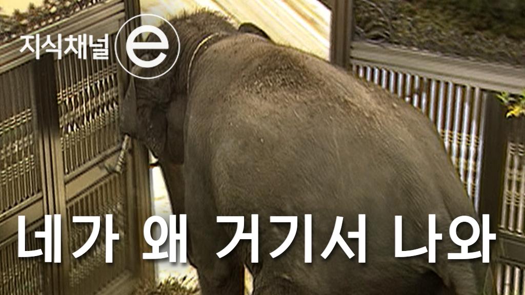 영감을 찾습니다 1 -코끼리 대탈출 사건