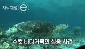 바다거북 출생의 비밀