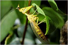 곤충, 전략의 귀재들