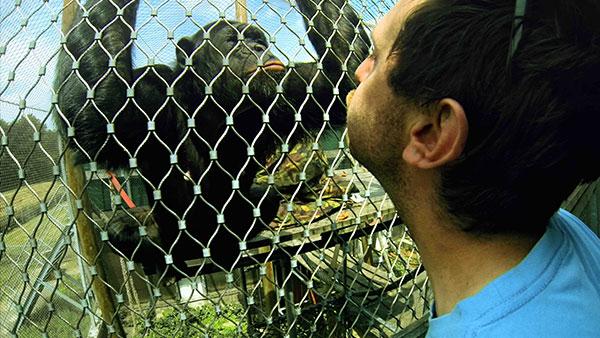 침팬지 콤플렉스