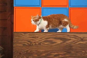 다른 사람이 키우는 고양이 사진, 동영상 구경은 이제 그만!랜선 집사를 벗어던진 지숙의 고군분투 ... 쑥집사 프로젝트!