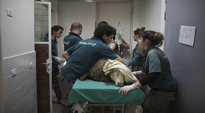 야생동물병원 24시