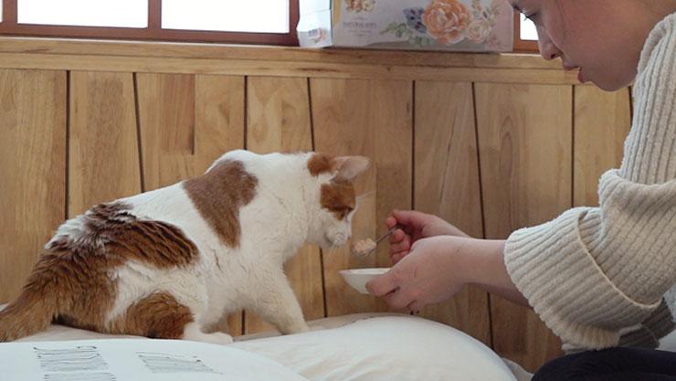 고양이를 부탁해 , 노묘를 대하는 우리의 자세