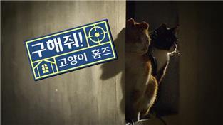 지식채널e, 구해줘, 고양이 홈즈